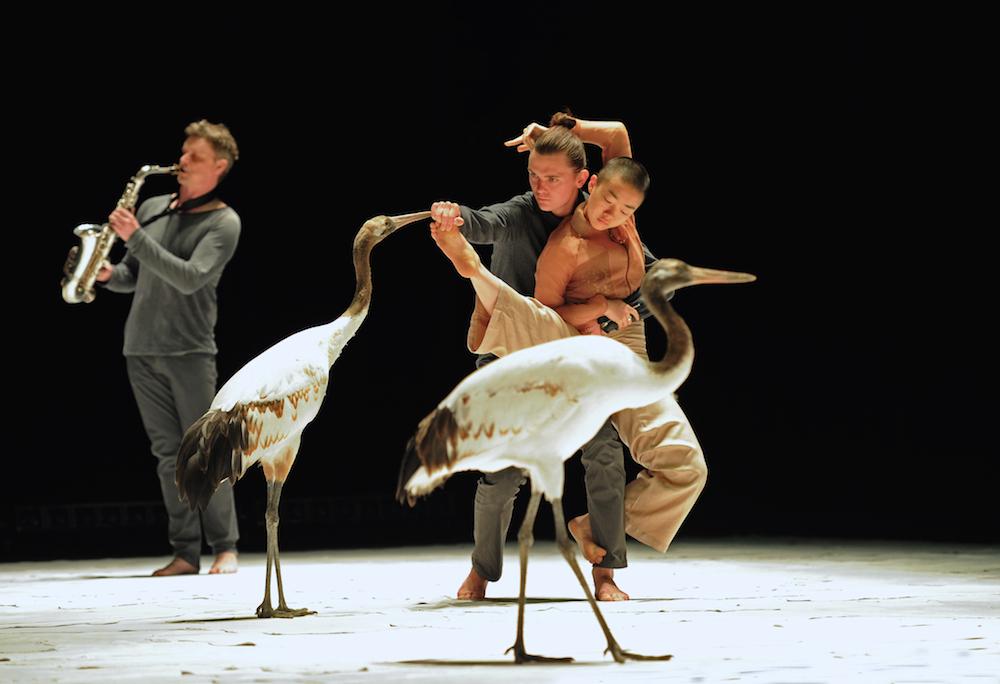 Light Bird, photos : Alain Julien