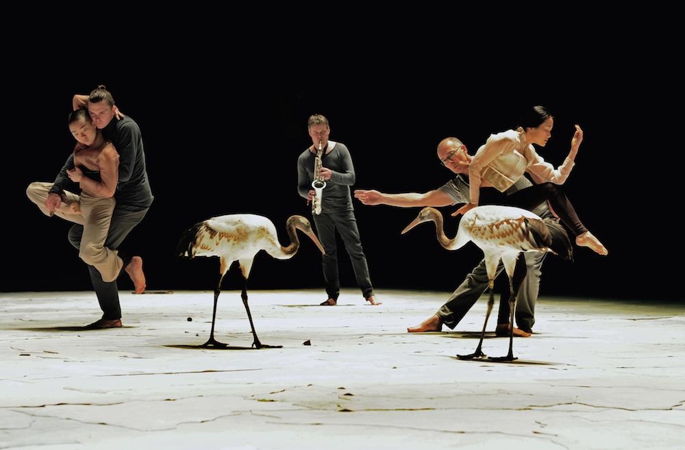 Light Bird, photos Alain Julien